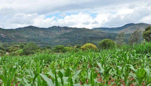 To better predict famine, look at 'start of season' - Futurity