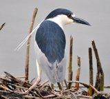 Home - Bear River Migratory Bird Refuge - U.S. Fish and Wildlife Service