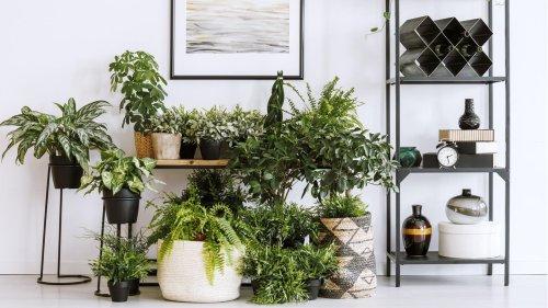 Diese fünf Pflanzen verschönern Ihr Zuhause