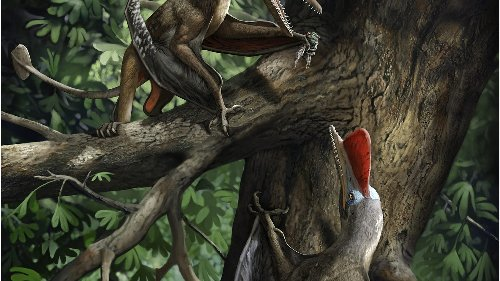'Monkeydactyl': Scientists discover Jurassic era flying reptile with oldest opposed thumbs
