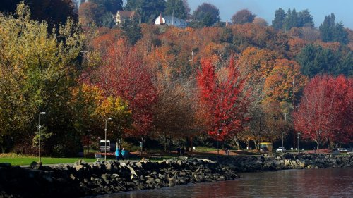 Good news: You don't need to rake your leaves. Experts explain why