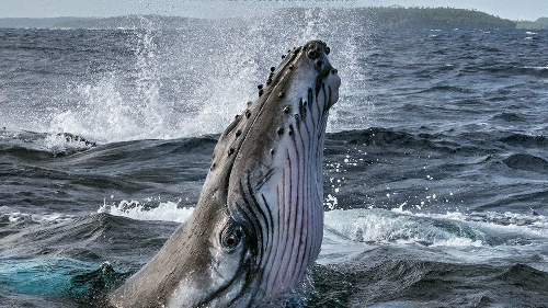 National Geographic released a docuseries on whales for Earth Day 2021