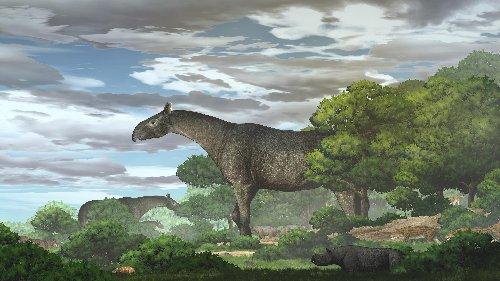 Newly discovered giant rhino species was among largest mammals ever to walk Earth