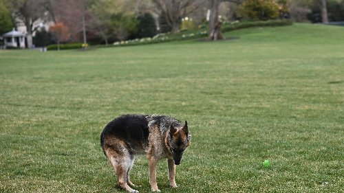 'Our sweet, good boy': First pooch Champ Biden dies, age 13, after months in White House