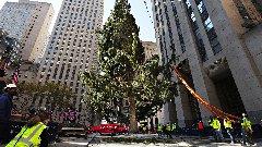 Discover rockefeller christmas tree