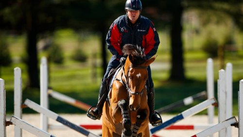 How do over 300 horses travel to the Tokyo Olympics? Business class.