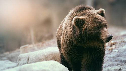 Here are the deadliest wild animals in North America – and states with the most fatal attacks