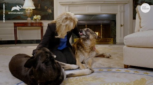 Biden family dogs Major and Champ are back at the White House after incident