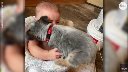 Adorable puppy tries to squeeze into a seat to comfort her favorite toddler