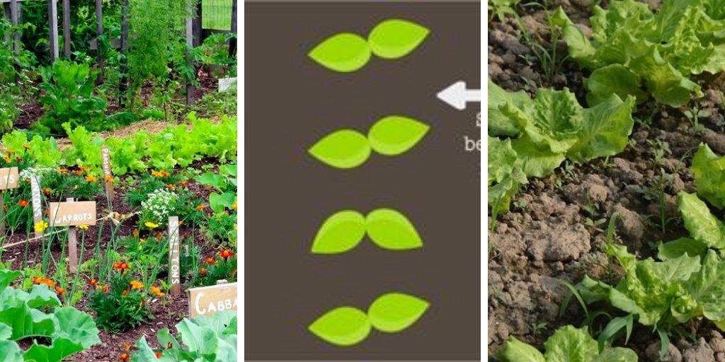 Gardening DIY - cover