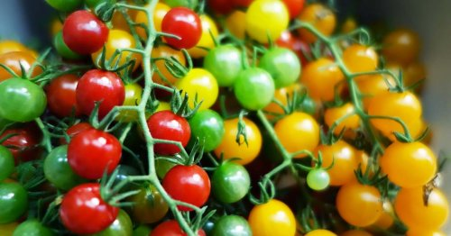 17 of the Best Cherry Tomatoes to Grow