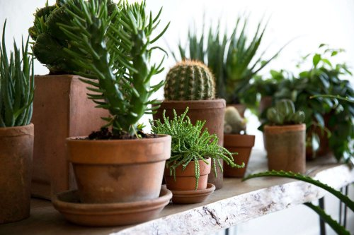 How to Successfully Grow Houseplants