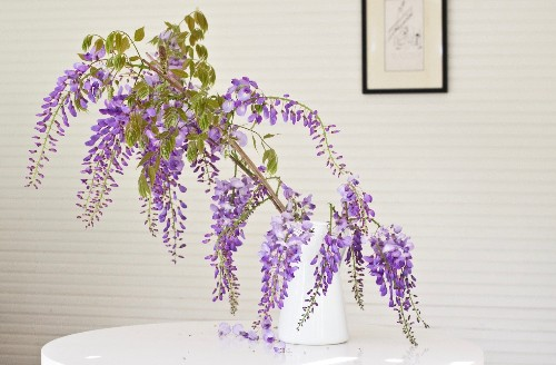 Mysterious Wisteria: An Irresistible Flower Goes from Vine to Vase - Gardenista