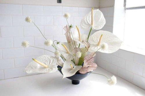 Anthuriums: Rethinking a Hotel Lobby Flower - Gardenista