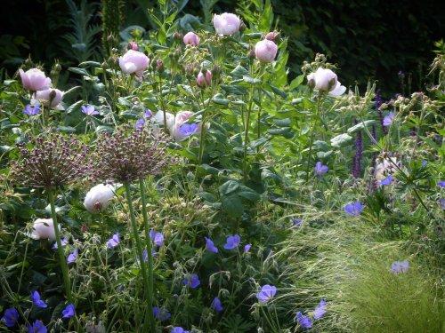 Deadheading Basics: How to Keep the Flowers Coming - Gardenista