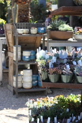 From Flora Grubb Gardens: 9 Secrets to Growing Succulent Plants Indoors - Gardenista