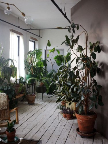 The Accidental Jungle: Shabd Simon-Alexander's Houseplants in a New York Apartment - Gardenista