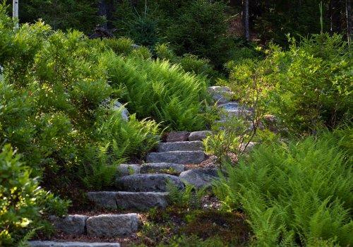 After the Hurricane: The Resurrection of a Wild Garden in Maine - Gardenista