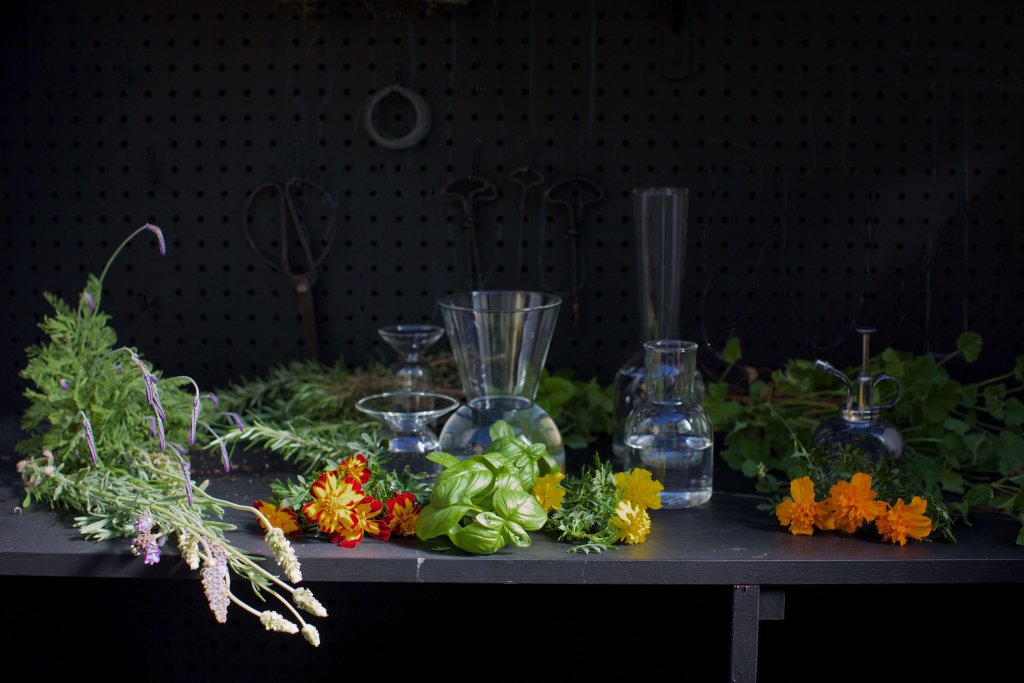 Flowers, Wildflowers & Floral Arrangements - cover