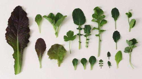 8 Winter Garden Greens to Grow Now - Gardenista
