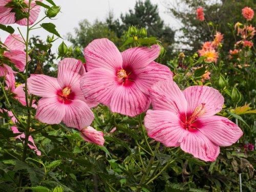 Backyard Botany cover image