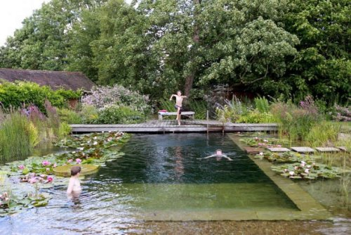 Water World: A Natural Swimming Pool, Lily Pads Included - Gardenista