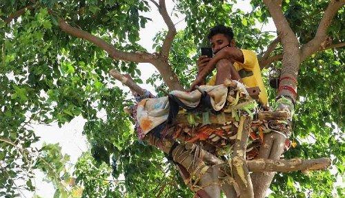 Koronavirüs testi pozitif çıkan genç, ağaç dalında 'izolasyon yatağı' yaptı