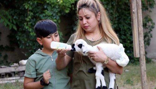 Annesinin kabullenmediği kuzuya 'bebek' gibi bakıyorlar