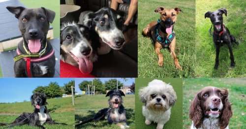 Give a dog a home? 12 adorable pups who are looking for adoption