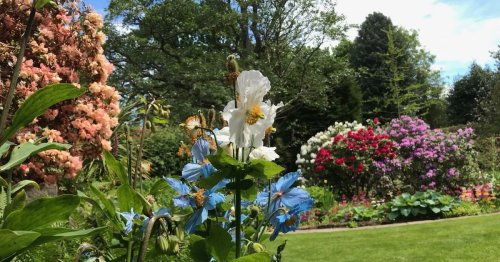 The secret Guisborough garden - and how you can see it for yourself