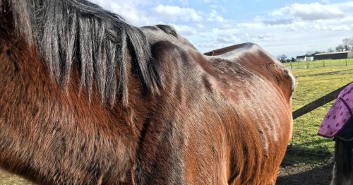 North Yorkshire mum and daughter banned from owning horses