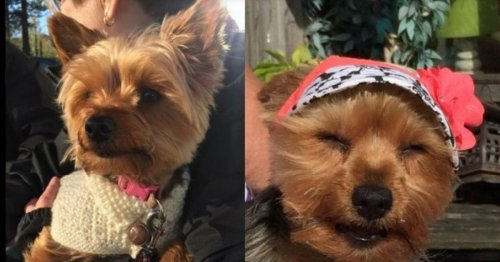Family pet 'disembowelled' in horrific attack by vicious dog