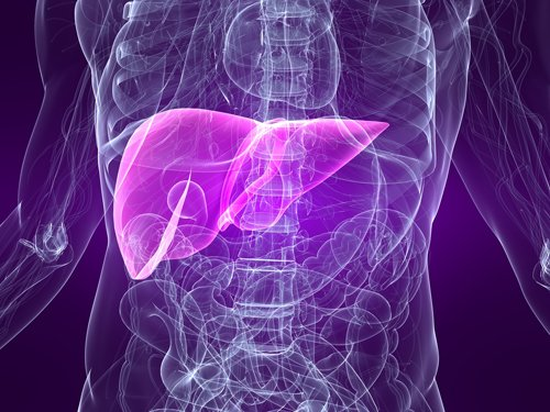 Intestinally Produced HDL Cholesterol Protects Liver from Inflammation