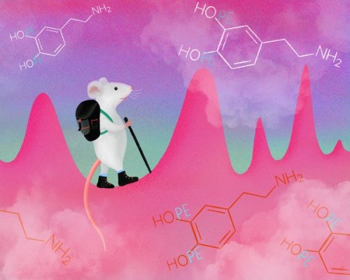 Pleasurable Dopamine Impulses Can Be Controlled at Will, Mouse Studies Show