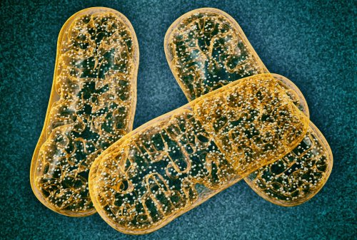 Novel Cancer Therapeutic Target Found in Mitochondrial Enzyme