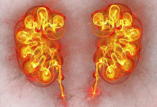 Scientists Identify Origins and Cellular Signals of Seven Childhood and Adult Kidney Cancers