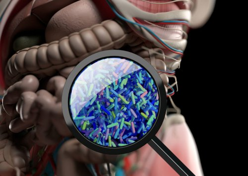 Researchers Uncover How the Gut Microbiome Impacts Stroke Severity