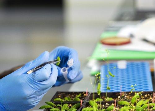 Nanotechnology for Plant Genetic Engineering