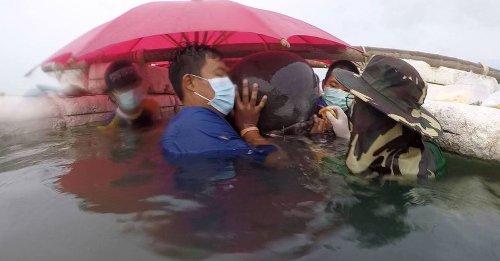 Balena spiaggiata: trovano nel suo ventre ciò che l'ha uccisa