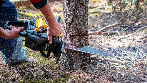 Von Bäume fällen bis Schnecken töten: Bei diesen Umwelt-Vergehen drohen hohe Strafen