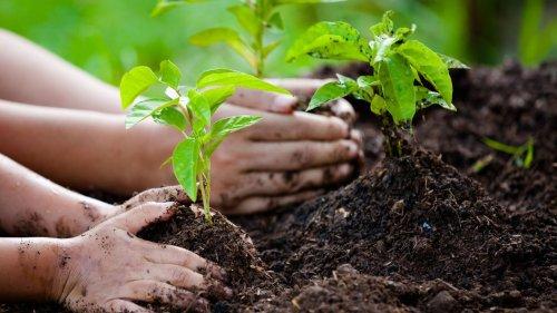 Bäume als Klimaretter: Wie sinnvoll ist das Aufforsten?