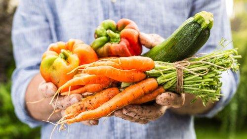 So gelingt der Balkon-Garten: Tipps für jeden Monat