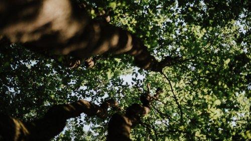 Der nationale Waldgipfel 2021 – mit Robert Habeck, Luisa Neubauer und Co.