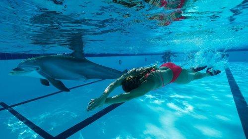 Delfinshows ohne Tierleid: Roboter-Doubles ersetzen echte Meeressäuger