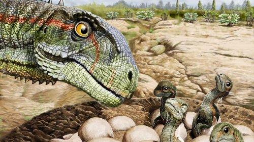 Spektakulärer Fund gibt Einblick in Sozialleben früher Dinosaurier