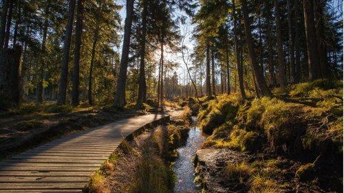 Herrlicher Harz: Die schönsten Wanderungen durch das Mittelgebirge