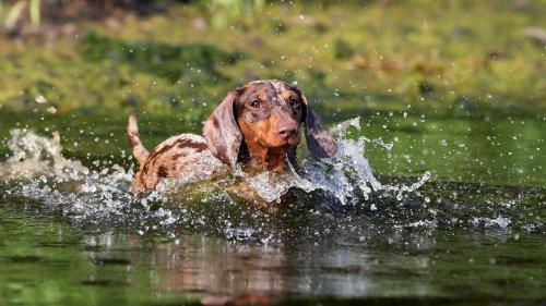 Wasservergiftung beim Hund: Wie Sie Ihren Vierbeiner schützen