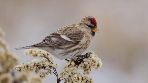 Experten-Quiz: Erkennen Sie diese heimischen Vögel?