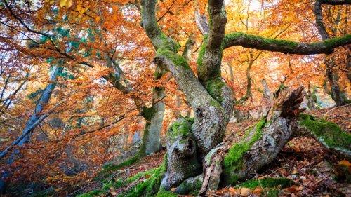 Die zehn schönsten Wälder Deutschlands