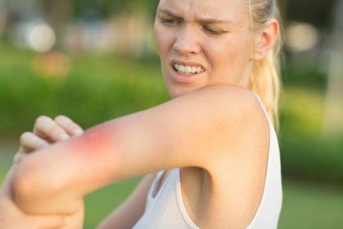 Vorsicht, Mücken übertragen Borreliose